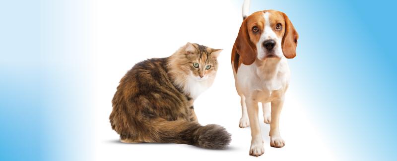 Plast uw hond of kat in huis?